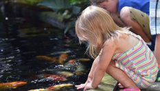 Girl looking at fish in the pond