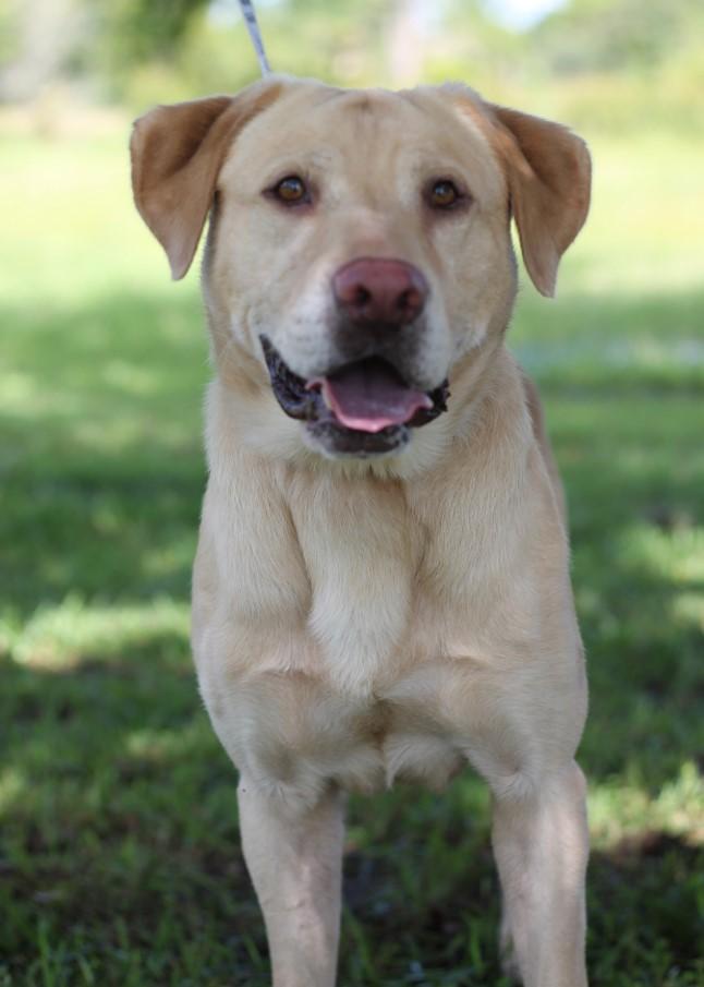 dog-with-humane-society-at-lakewood-ranch-1.jpg