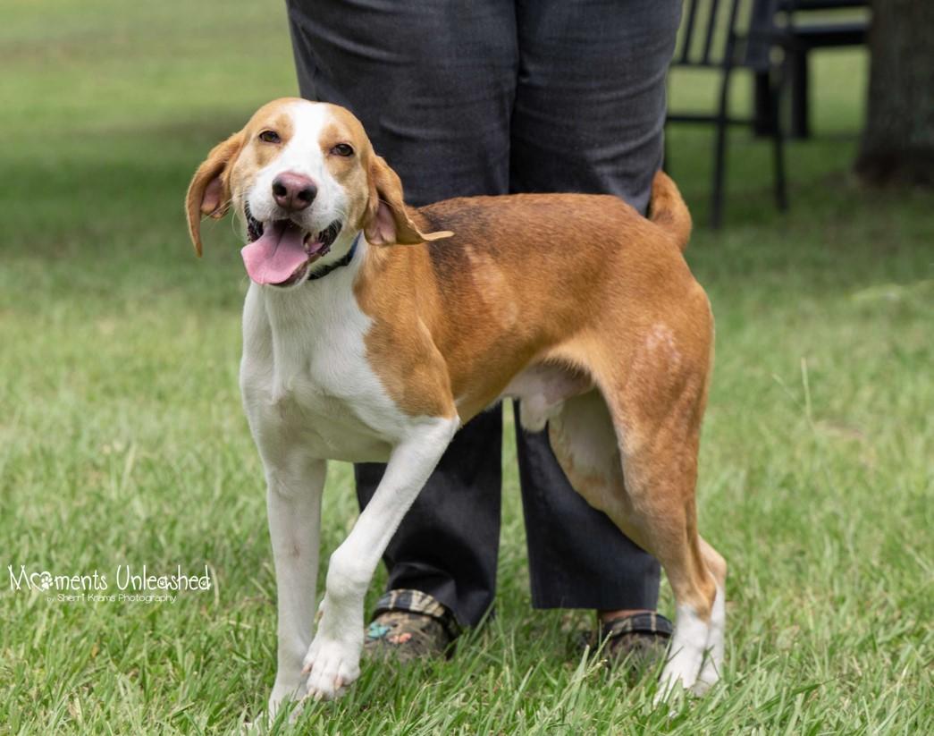 dog-with-humane-society-at-lakewood-ranch-5.jpg